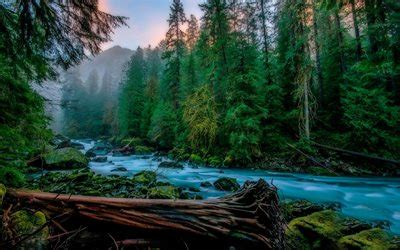 Download wallpapers Skykomish, mountain river, fog, forest